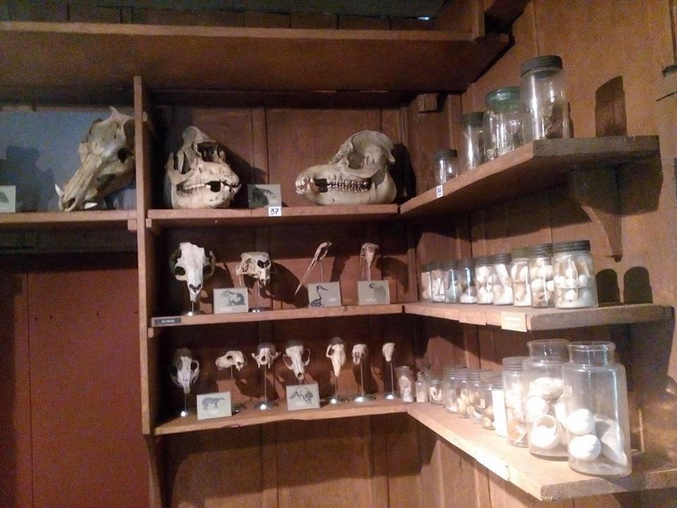 Estudos que ainda permanecem no Museu. Foto: André Souza